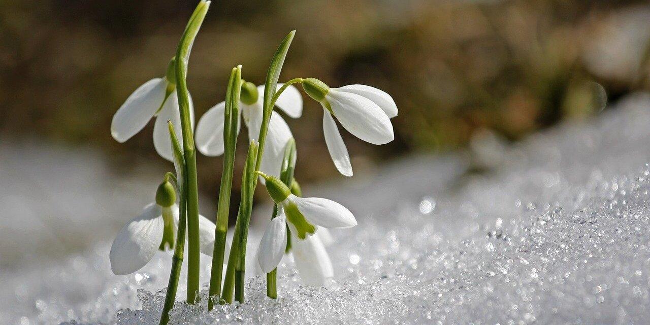 Jaro, čas očisty a regenerace