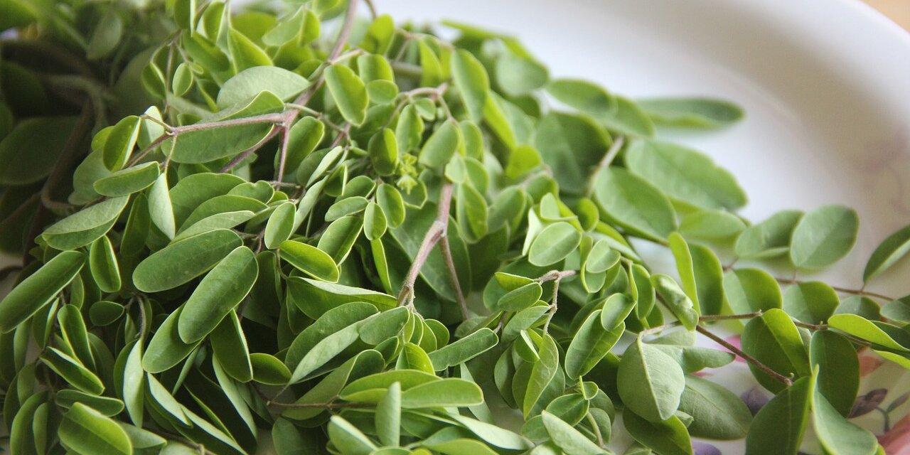 Superpotravina Moringa oleifera